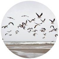 Seagulls flying along coast